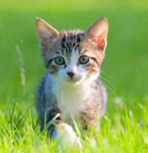 Miaou a 1 an !